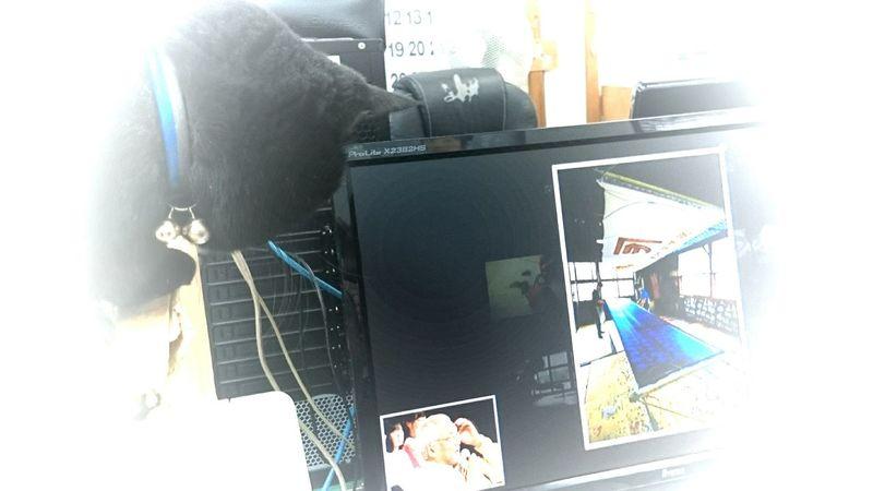 花子も写真が好きなようです? She also likes photos Cat♡ Pet Love Workplace Mobile Photography