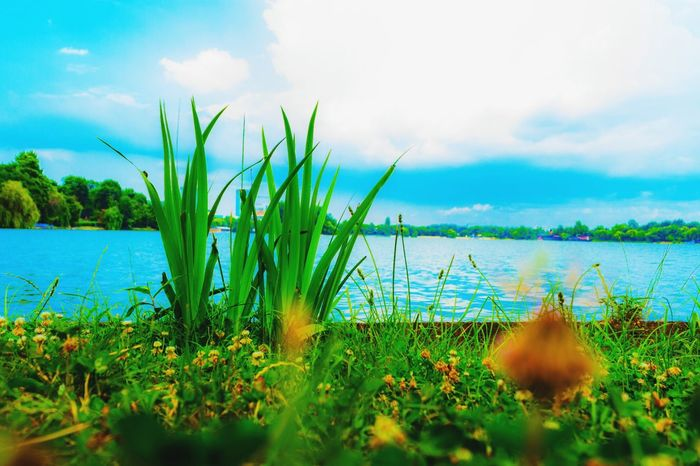 Grass Lake Plant Water Beauty In Nature