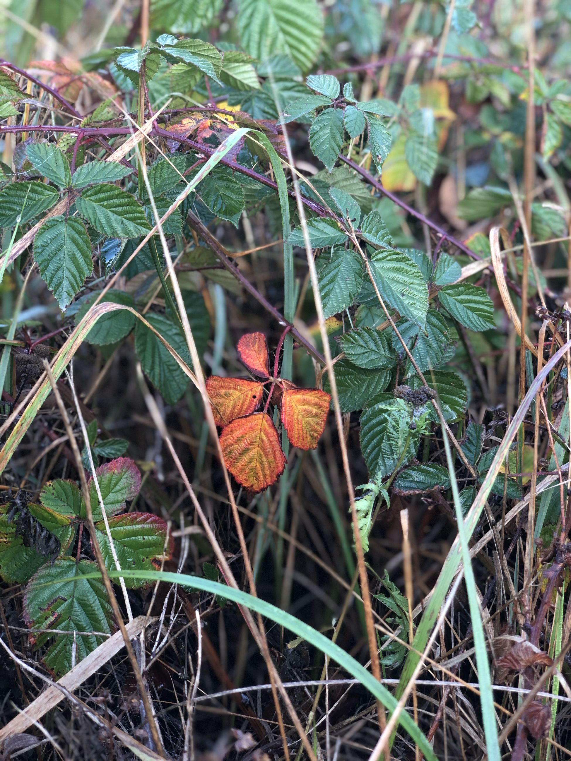 plant part, leaf, plant, one animal, day, nature, animal, animal themes, animal wildlife, animals in the wild, growth, green color, outdoors, perching, focus on foreground, land, bird, orange color, beauty in nature, vertebrate, animal wing, butterfly - insect