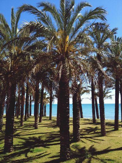 Exploring the nice places of Torremolinos by Bikeride
