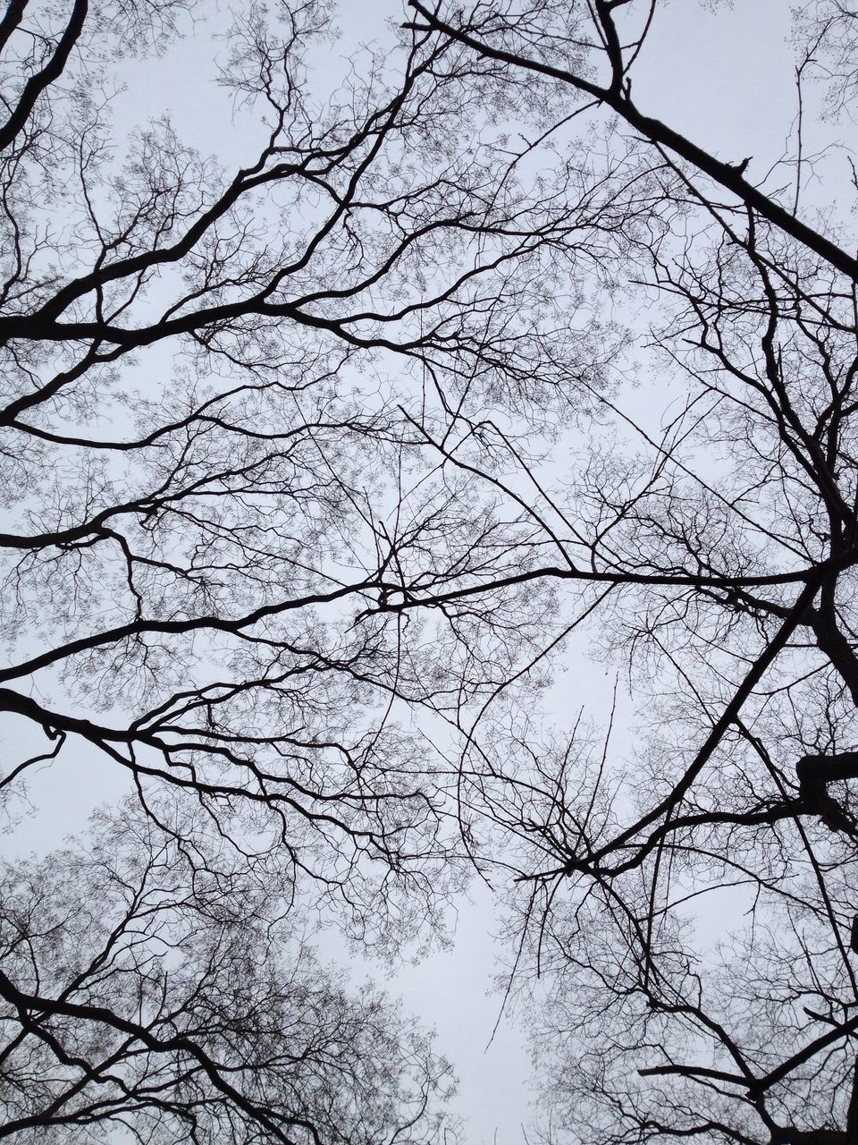 Bare Trees In Forest Against Sky
