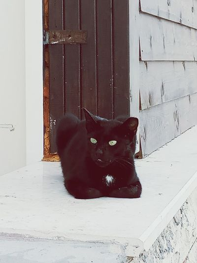 Black Color Domestic Cat Door Pets Wood - Material Animal Mammal One Animal No People Animal Themes Domestic Animals Day Close-up Outdoors Done That. EyeEmNewHere Rethink Things