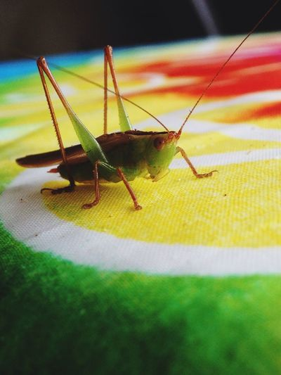 Grasshoppers up close are amazing!