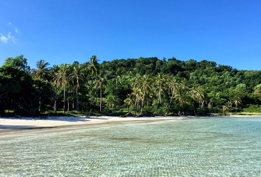 Planet Earth Palm Tree Nature Beauty In Nature Blue Clear Sky Beach Water Landscape Vietnam Island Phu Quoc