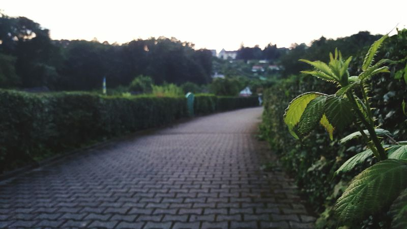 Park Germany Hagen Path Path In Nature Green Nature Garden Nature