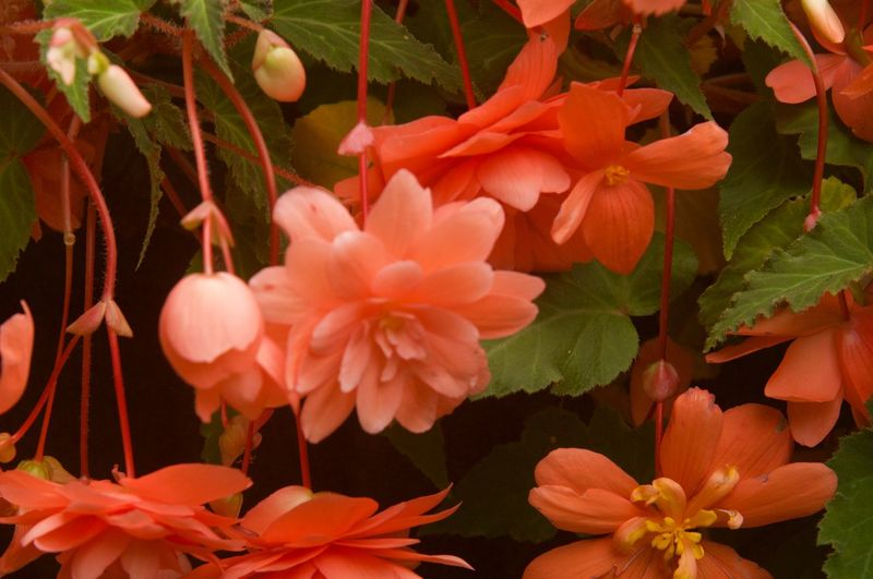 Plant Growth Flower Beauty In Nature Flowering Plant Plant Part Freshness