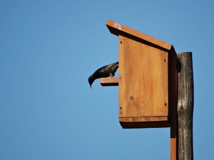 Low angle view of bird perching on birdhouse
