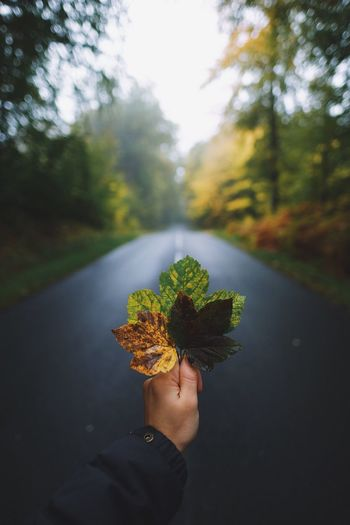 Cropped Hand Of Person Holding Leaves On Road During Autumn