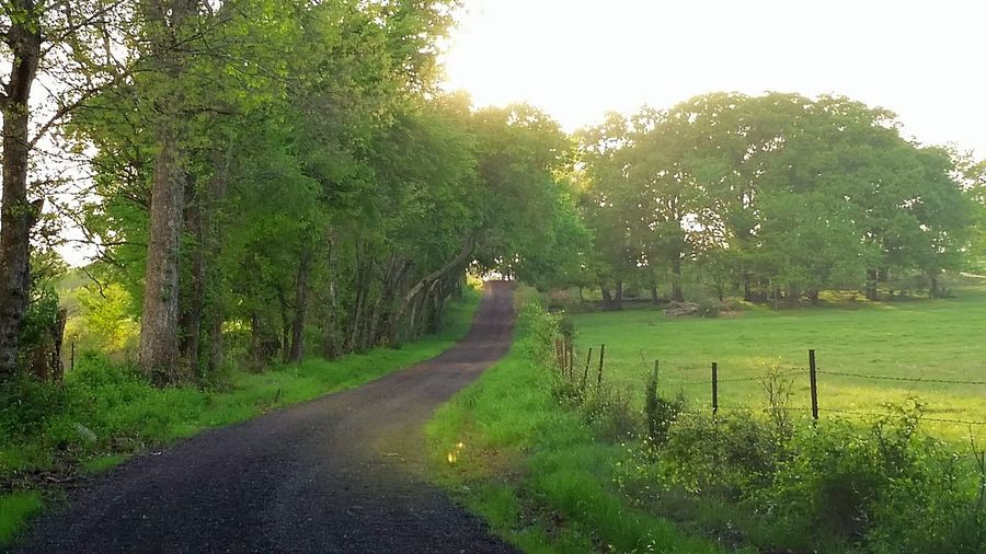 Uphill road to home Tree. Green Color Nature Growth Grass Day No People Road Outdoors Beauty In Nature Landscape Lush - Description Sky Country Road Countryside Beauty In Nature Walk Home. The Way Forward Freshness Tranquility