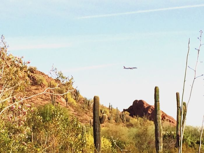Arizona Desert Botanical Garden Phoenix, AZ Phoenix Papago Park EyeEm Nature Lover Vacation Landscape_Collection Watching Airplanes