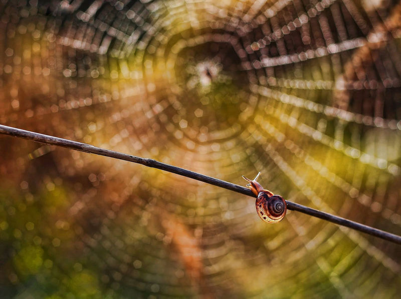 Close-up Day Focus On Foreground Hanging Nature No People Outdoors Snail Snail Collection Snail Photography Snails Snailshell Snail🐌 Spider Macro Spider Nature_collection Eyenaturelover Spider Web Spider Webs Spiderweb Spiderwebs Spiderworld Water