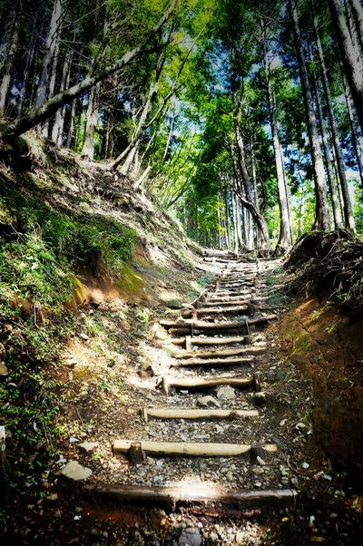 2013 Beauty In Nature Forest Light Mountain Nature Outdoors Sun Trecking Tree 山 木 森 塔ノ岳