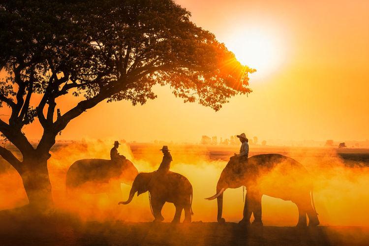 Men riding elephants during sunset