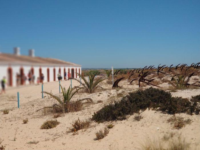 Anchor summer Anchor Seaside Sand Seaside Algarve Praia Do Barril Tavira Clear Sky Desert Arid Climate Sand Dune Sand Sunny Sky Architecture