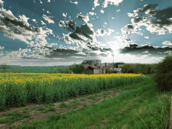 Dramatic countryside clouds Plant Growth Land Field Agriculture Flower Landscape Environment Yellow Crop  Rural Scene Farm Flowering Plant Nature Beauty In Nature Sky Sunflower Freshness Scenics - Nature Tranquility