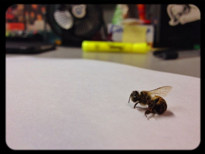 Office Bee Buggs