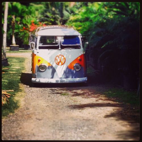 Volkswagen spotting in the country.. Hawaii Vw Aircooled Vdubs