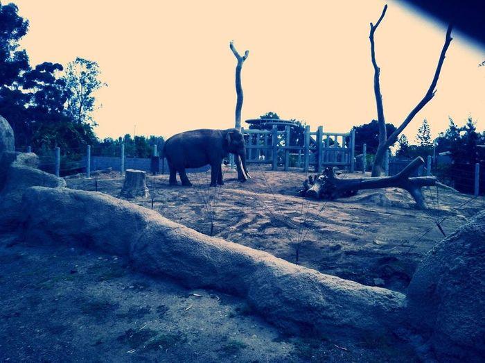 Elephant Mesa Blues.