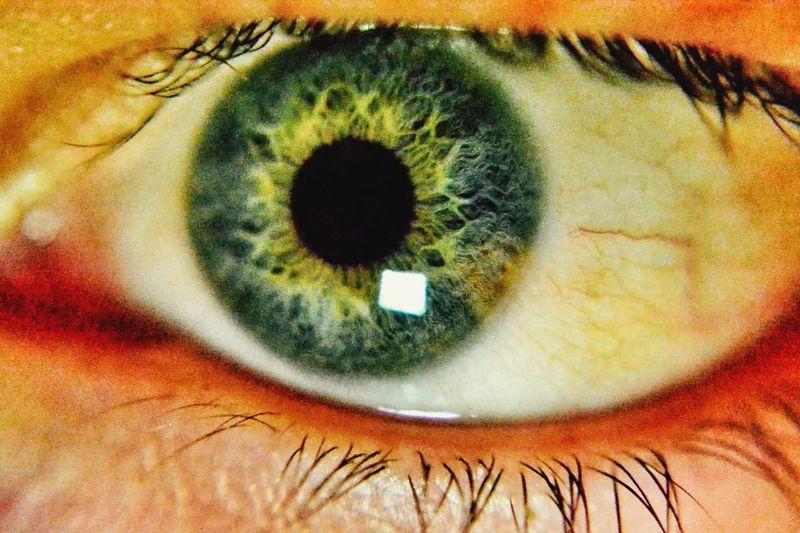 Eyelash Eyesight Human Eye Sensory Perception Portrait Close-up