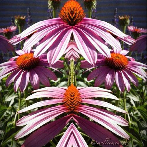 🌸Art Flowerart Prayforemmy PicturePerfect Molliesflowers Molliesflowersedited Ink763