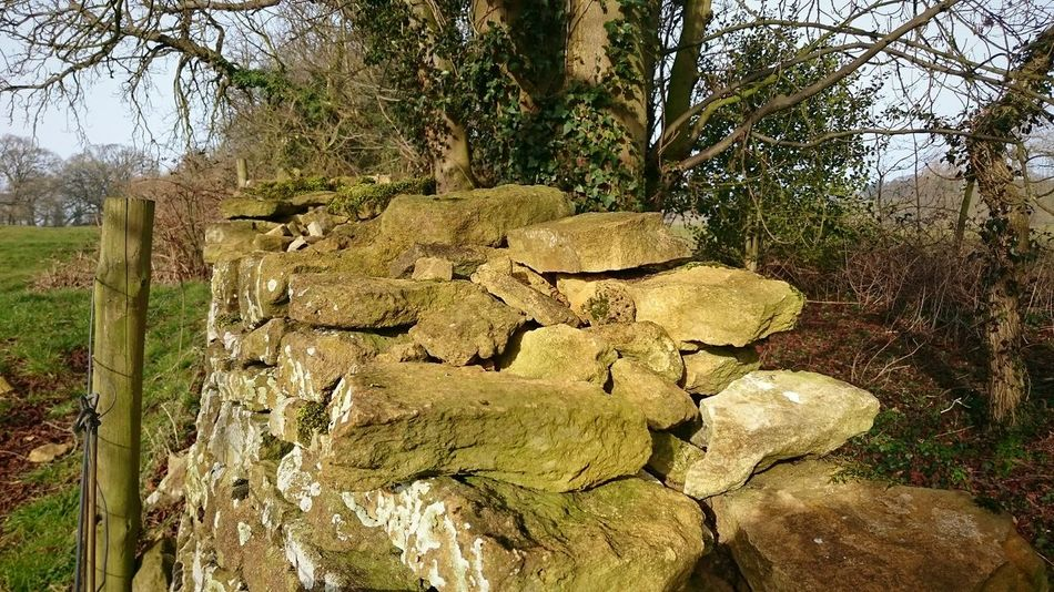 Hanging Out Taking Photos Focus On Foreground Beauty In Nature Perspective Outdoors Nature Photography Fences & Beyond Rural Scene Stone Wall Rocks Cotswolds Trees Undergrowth