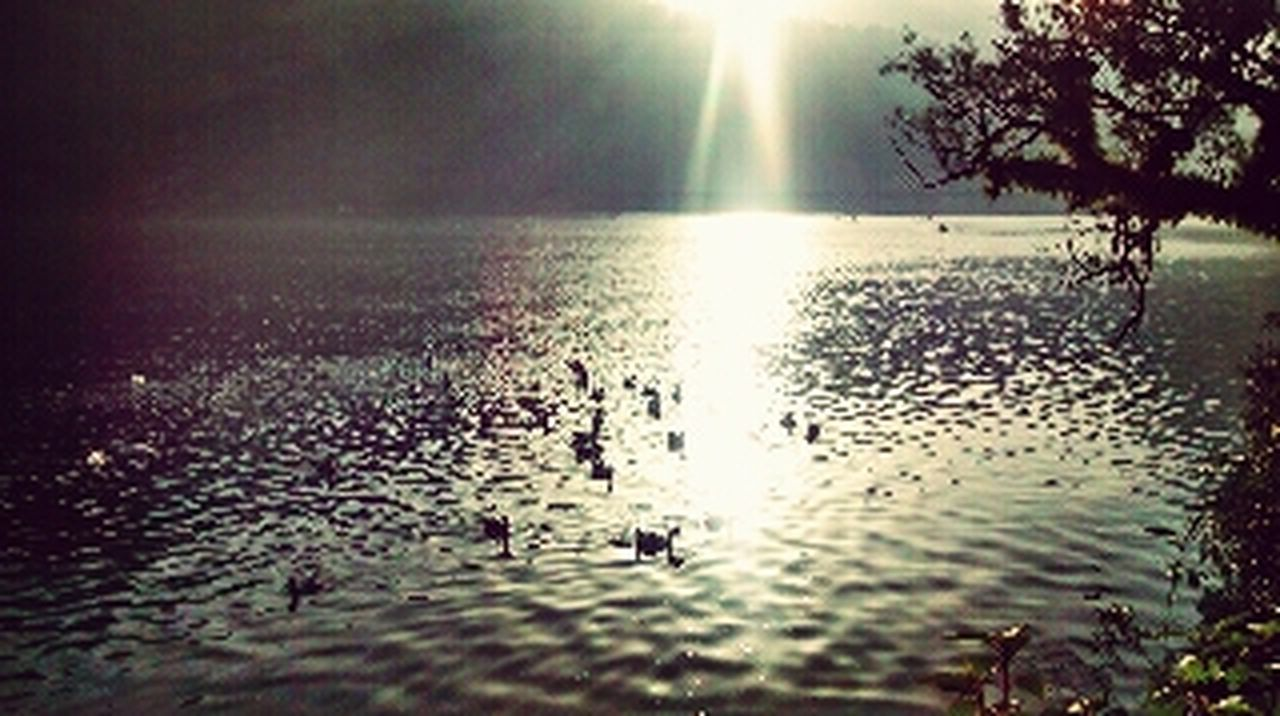 water, reflection, nature, scenics, bird, lake, beauty in nature, silhouette, tree, tranquil scene, sunlight, tranquility, rippled, sunset, animal themes, sun, outdoors, animals in the wild, sky, day, no people, swan