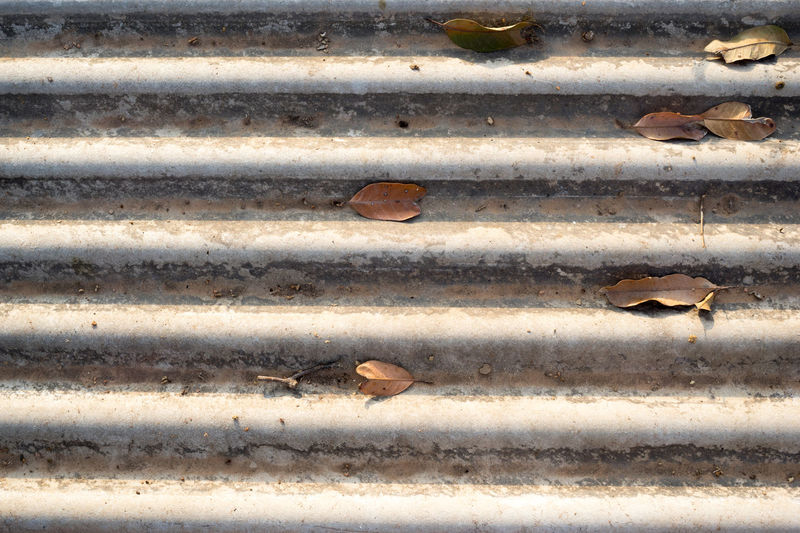 Close-up of bird on rusty metal