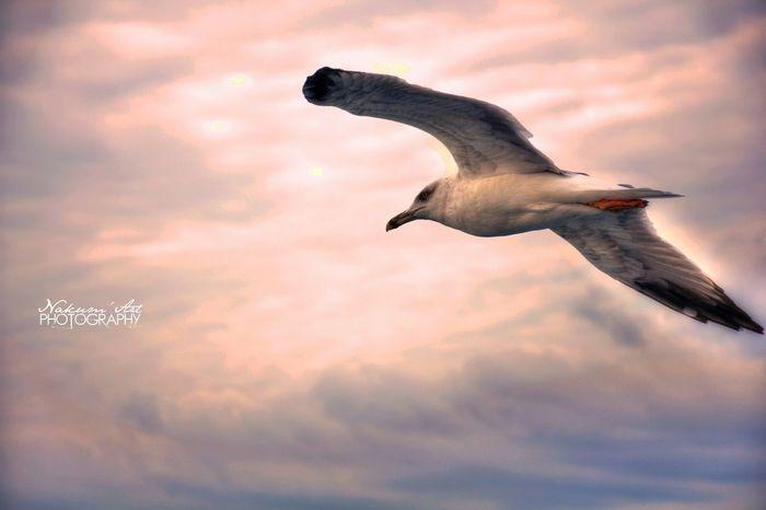 Bird Photography Birds Sky Fliying Birds MyPhotography Clouds And Sky Landscape Wings Of Desire EyeEm Birds EyeEm Best Shots - Nature