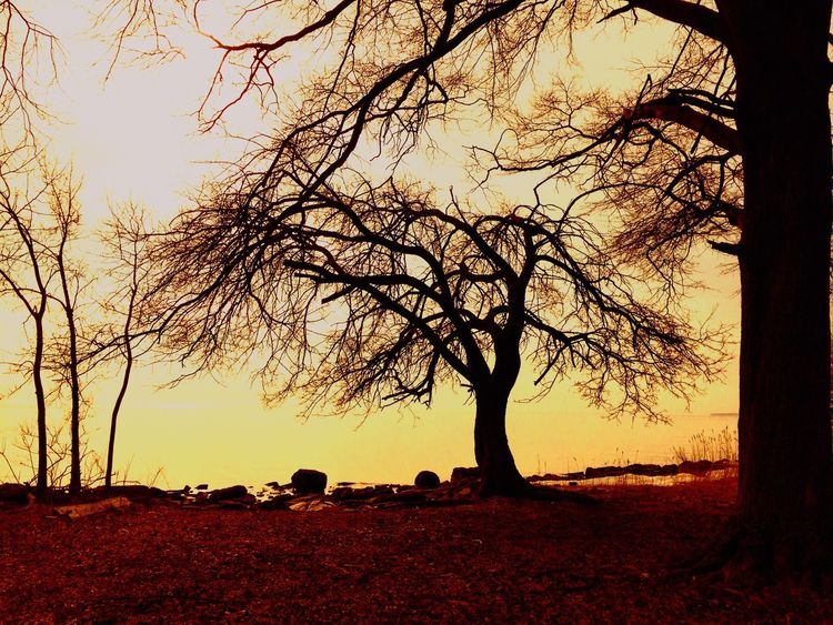 Sunset Landscape_Collection Nature On Your Doorstep EyeEm Nature Lover Trees Nature Photography Nature_collection Nature Landscapes Showcase: March Showcase March Landscapes With WhiteWall The Great Outdoors - 2016 EyeEm Awards