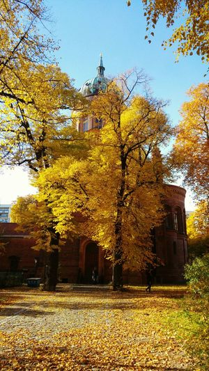 Colors Of Autumn Autumn 2015 Autumn Leaves Berlin Berlin Photography
