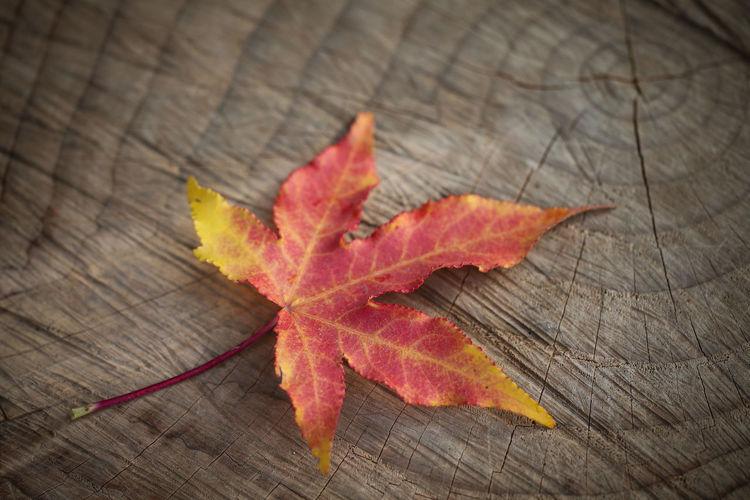 COLORS OF AUTUMN LEAVES Argentina Autumn Autumn Collection Autumn Colors Autumn Leaves Autumn🍁🍁🍁 Colours Of Autumn Composition Córdoba Hojas De Otoño Leaf No People Wood Color Palette