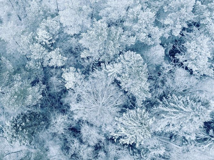 First snow. Cold Temperature Ice Winter Snow Frozen Backgrounds Frost Ice Crystal Weather Snowflake Nature Blue Full Frame White Color No People Beauty In Nature Textured  Window High Angle View Close-up