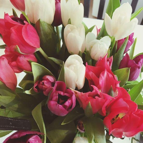 Tulips🌷 Flowers Sweden Summertime