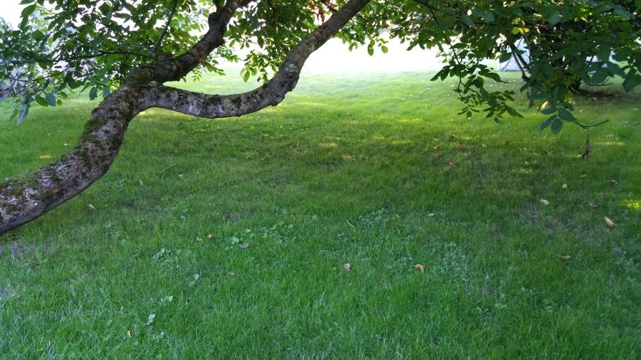 Tree Green Color Beauty In Nature Grass Nature Outdoors Tranquil Scene Scenics No People Evening In My Garden