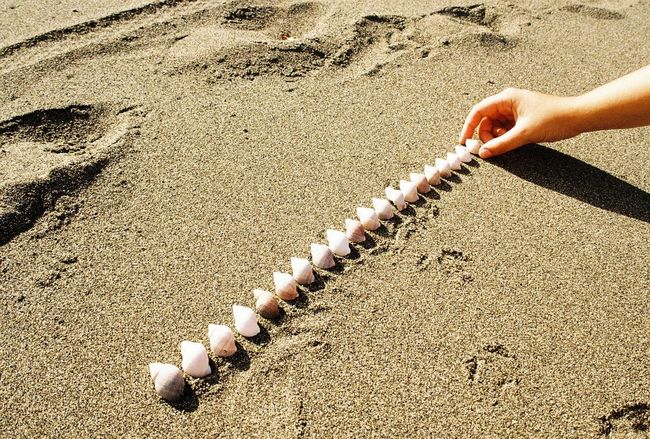 Conchitas. Analogue Photography Sea Creatures Shells Shell High Angle View Sunlight Sand Day Land Nature Beach One Person Human Body Part Human Hand Women