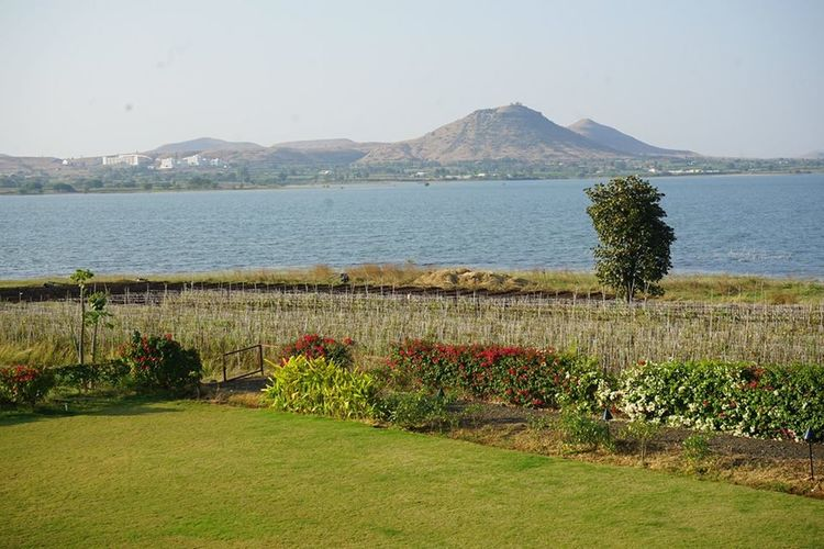 sula Vineyards Landscape Horizon Over Water
