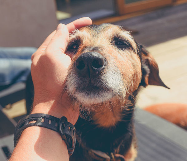 Close-Up Of Hand Petting Dog