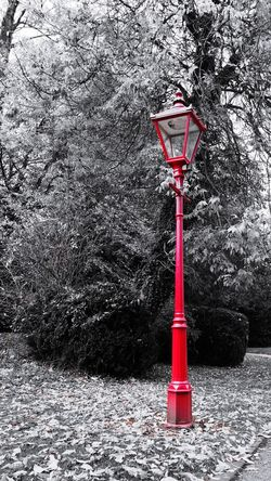 red British lamp post Leaves Street Light Lamppost Blackandwhite Black And White Black & White B&w b&w street photography Honor 10 ArtWork Art Pillar Art is Everywhere Red Tree Close-up Sky