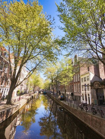 Canal amidst trees in city