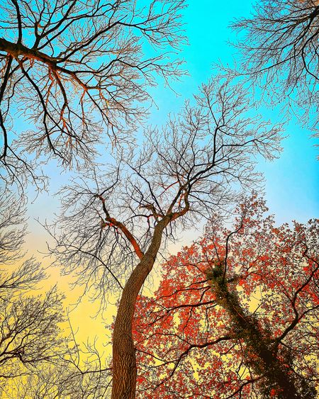 Sky Capillaries Bristol Arboretum Autumn colors Trees And Sky Wood Fall Aesthetics Path Empty Sunset Sky Artistic Backgrounds Full Frame Abstract Textured  Pattern Sky Close-up Change Silhouette Sun Outline Shining Rays Calm Evening Orange Color Sunbeam Autumn Mood EyeEmNewHere