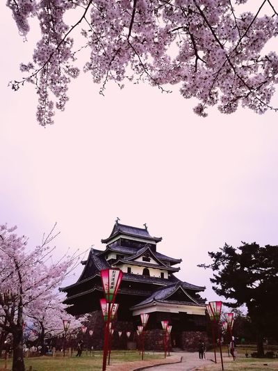 Tree Sky No People Nature Day Cherry Blossoms Pink Japanese Castle Spring Flowers Outdoors