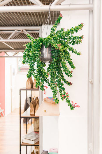 Plant Potted Plant Green Color Domestic Cat Growth Cat Domestic Architecture No People Mammal Pets Indoors  Domestic Animals Animal Nature Animal Themes Feline One Animal Day Vertebrate Houseplant