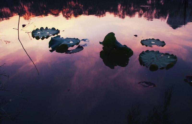 Blue frog 🐸