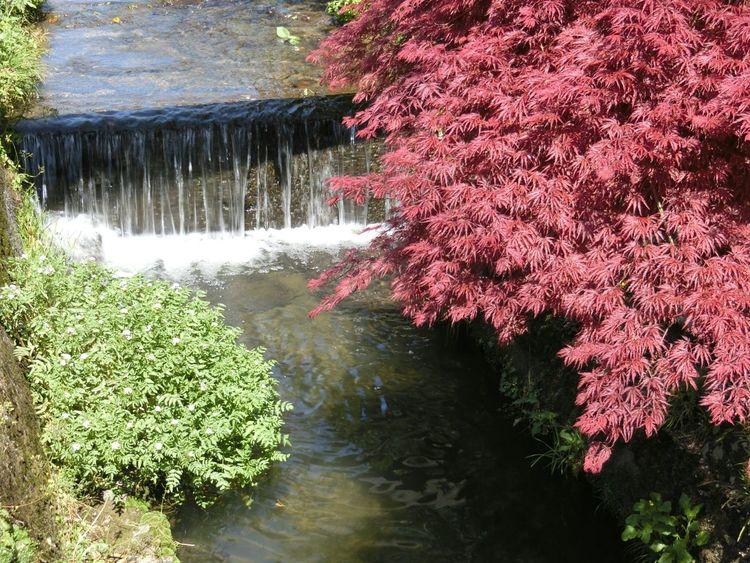 小川 Stream Nature Landscape
