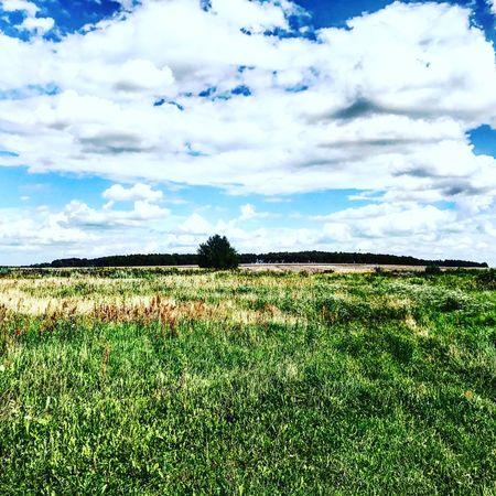 Landscape Tree Forest Cloud
