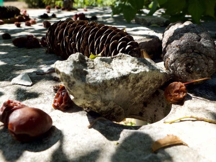Close-up of turtle on rocks