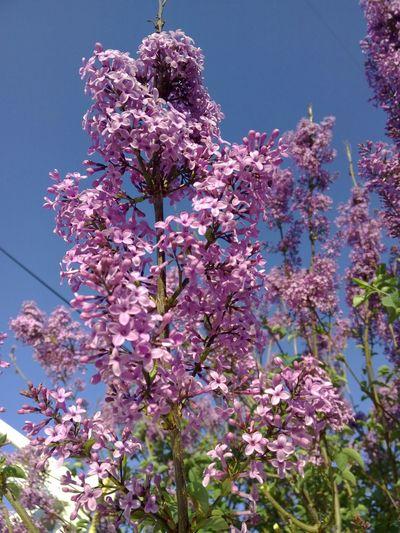 Turkey Izmir Noedit Nofilter Flower Pink Pink Flower Nature EyeEm Nature Lover EyeEm Gallery EyeEm Best Shots - Nature