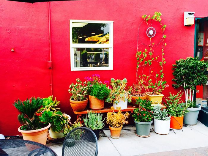 Place Of Heart Pebbles Cafe Neighborhood Potted Plant Plant Growth Building Exterior House Window Window Box Built Structure Architecture Flower Outdoors No People Day Red Nature Multi Colored