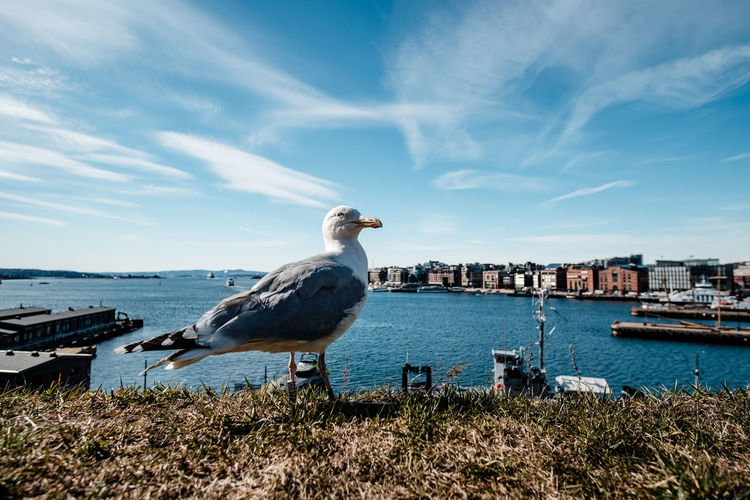 Seagull perching on grassy field by sea against blue sky