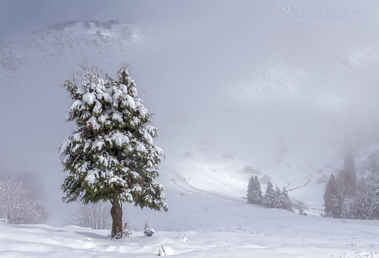 snow, winter, cold temperature, tree, plant, beauty in nature, covering, tranquility, scenics - nature, tranquil scene, landscape, nature, sky, white color, environment, no people, land, frozen, day, outdoors, extreme weather, blizzard, snowcapped mountain, snowing, powder snow